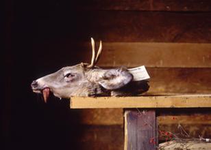 Robert Diamante, Deer Head, C-Print, 2007
