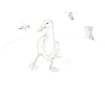 <i>Duck with Bees</i>, pencil on paper