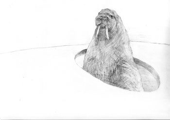Lydia Badger, <i>Wlarus</i>, pencil on paper, 11